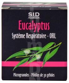 Eucalyptus Système Respiratoire - ORL